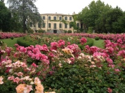 The rose garden in Chateau d'Estoublon...