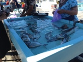 The fish were displayed alive in salt water.
