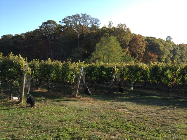 ...to waiting for sunset in the vineyard.