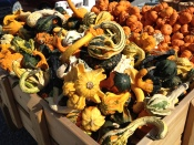 ... and the vibrant gourds are perfect for decorating.